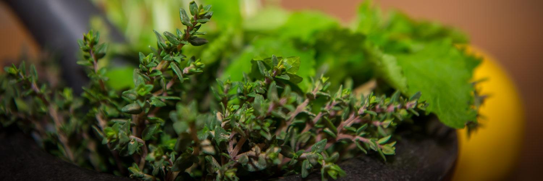phytotherapie-pflanzenheilkunde